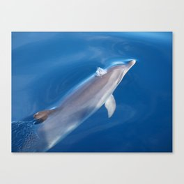 Dolphin and dreams Canvas Print