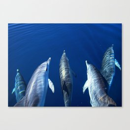 Playful and friendly dolphins Canvas Print
