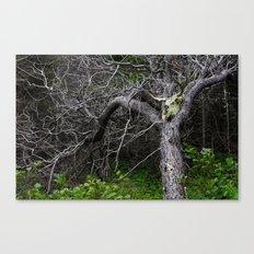 Forest Spirit Skull Canvas Print