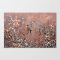 robin Canvas Prints featuring robin by RasaOm