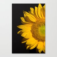 sunflower Canvas Prints featuring sunflower by mark ashkenazi
