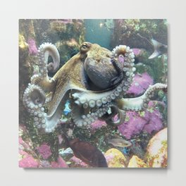 The Octopus's Garden Metal Print