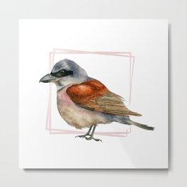 Shrike Bird Watercolor Painting 2 Metal Print