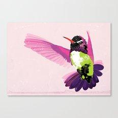 Paloma. Canvas Print