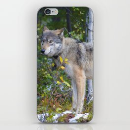 Wolf encounter in Jasper National Park iPhone Skin