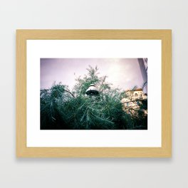 untitled (wildwuchs) Framed Art Print