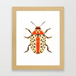 White and Orange Beetle Framed Art Print