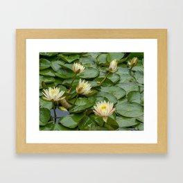 Lotus Blossoms Framed Art Print