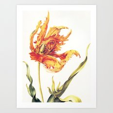 V. Vintage Flowers Botanical Print by Anna Maria Sibylla Merian - Parrot Tulip Art Print