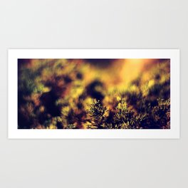 REDFERN - Lomograpy Redscale XR 50-200 - 120 film Art Print