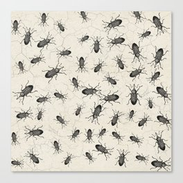 Weevil Beetle chaos Canvas Print