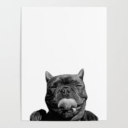 frenchie licking you Poster