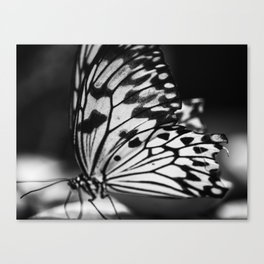 Mariposa (B&W) Canvas Print