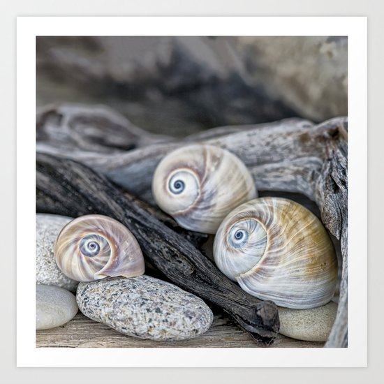 Shark's eye shells and driftwood Art Print