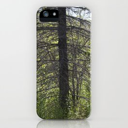 Summer Forest 3 iPhone Case