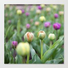 Tulip Bloom Canvas Print