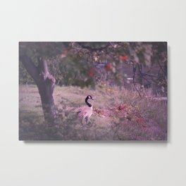Goose in the Garden Metal Print