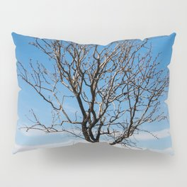 Lone dry tree in serene scene with blue sky Pillow Sham