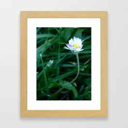 Music Concourse Flower Framed Art Print