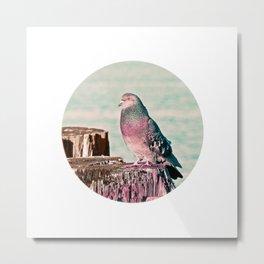 Gentleman Pigeon Bird Northwest Wildlife Metal Print