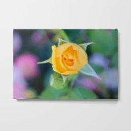 Macro Yellow Tea Rose Metal Print