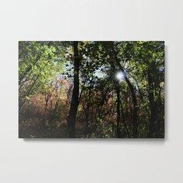 Seasons Forest Metal Print