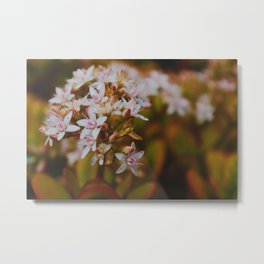 Fall Bloom in Hawaii Metal Print