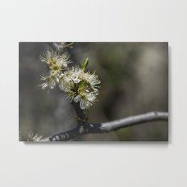Sloe flowers #1 Metal Print