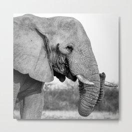 B&W Elephant 2 Metal Print