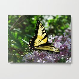 Simply Beautiful Tiger Swallowtail Butterfly Metal Print