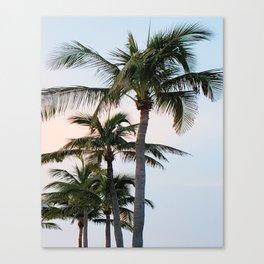 Lauderdale Palms Canvas Print