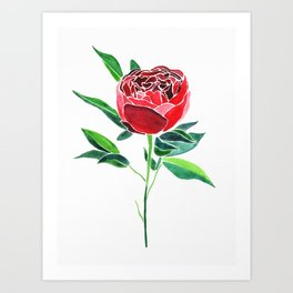 Peony Flower Watercolor Art Print