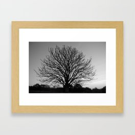 richmond park- b-w Framed Art Print