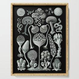 Ernst Haeckel - Mycetozoa (black) Serving Tray