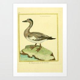 044 canard (Fr) Art Print