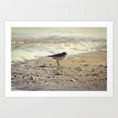 Evening Beside the Sea Art Print