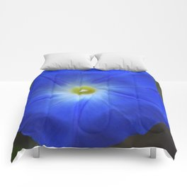Blue, Heavenly Blue morning glory Comforters
