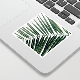 California Palm Sticker