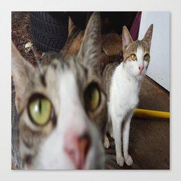 Back Yard Kitties  Canvas Print