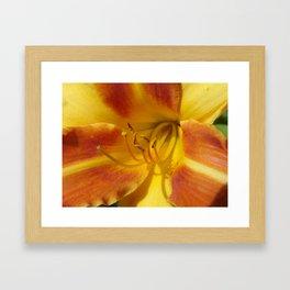 #406 flower of day 7 22 2014 BITTERROOT MT Framed Art Print