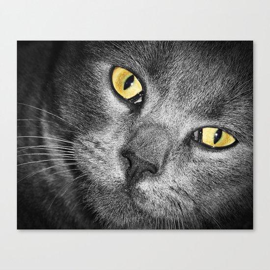 Silver Cat Canvas Print