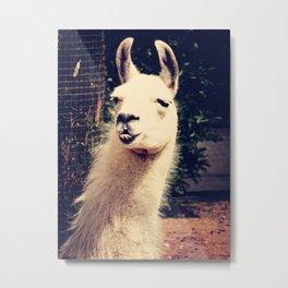What The Llama Metal Print