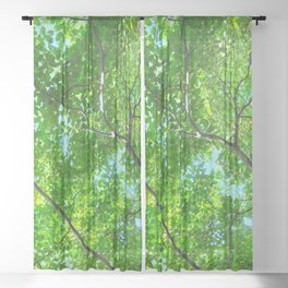 Canopy of Green, Leafy Branches with Blue Sky Sheer Curtain