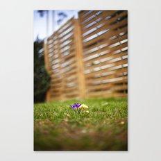 shrunk Canvas Print
