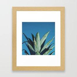 Pineapple head Framed Art Print