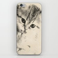 kitten iPhone & iPod Skins featuring Kitten by Augustinet