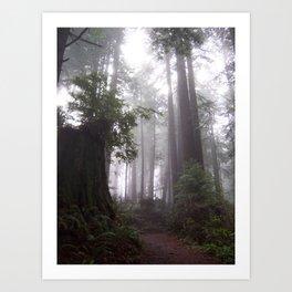 Misty Forest Art Print