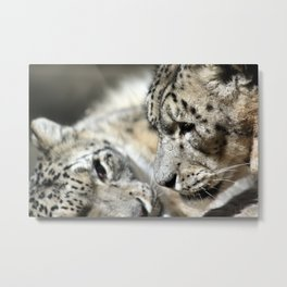 """Thinking of You"" Snow Leopards Metal Print"