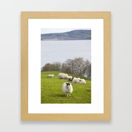Highland Sheep Framed Art Print