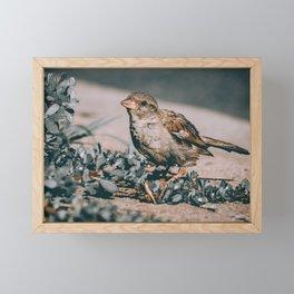 Summer Sparrow. Bird Photograph Framed Mini Art Print